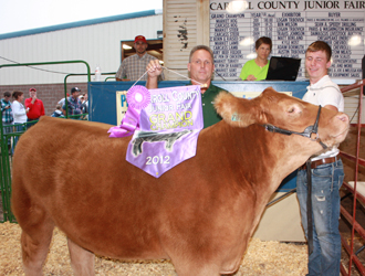 Carroll County Grand Champion Steer