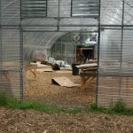 Youngstown urban farm