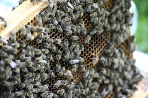 photo of bee hive