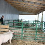 """Garrit Sproull was excited to move his sows into this lean-to, attached to a new 45-by-60 barn built for his growing farrowing operation in Harrison County. But he won his national FFA swine award with work in a hand-built pig barn so rough Sproull admits, """"I have no idea how some of those piglets lived."""""""