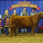 farm show.jr.limousin.grand ch