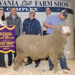 farm show.sheep.calvert.supreme