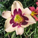 Betty Cusick, Hanoverton, Ohio, grows about 20 varieties of day lilies.