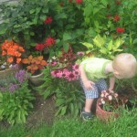 Laura Weinzimmer's grandson, Jack, is checking out her flower beds. She grows bee balm, coneflower and bettany.
