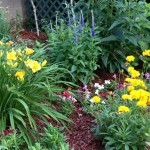 This is Peg Zeleznik's cottage garden in Berlin Center, Ohio. Her garden features coreopsis, daylillies, snapdragons and Veronica speedwell.