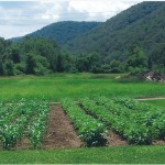Jim Daily, Youngsville, Pennsylvania, grows potatoes, corn, tomatoes and cucumbers near the banks of the Allegheny River.