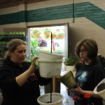 Jade Betts and Chloe Jeffries works on a custom potted plant for a customer.