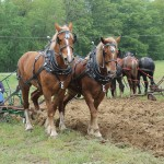 horse plowing.Matt Abfall