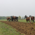 horse plowing.behind