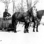 (Submitted by Edwin D. Cole)Carl M. Cole, born in 1893, guides horses Lady and Nell through the snow in Biglick Township, in Eastern Hancock County, Ohio. Carl's grandson, Ed Cole, submitted the photo. He said it appears the photo was taken in the late 1920s or early 1930s.