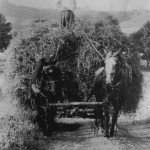 (Submitted by Wayne Cooper Jr.)This photo, taken in 1939, shows Wayne Cooper Sr. driving a wagon filled with hay.
