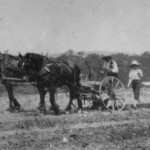 (Submitted by Eli Miller)John Hively and his son, Curtis, cultivate corn at the Hively's Highland Farm in New Waterford, Ohio. This photo was taken in 1919.