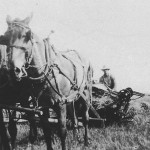 (Submitted by Gary Hemphill)Gary Hemphill submitted this photo of his great-uncle Roy Cooper with his father's team, pulling what appears to be a binder and putting up wheat. The photo was taken in Butler Co., Pennsylvania, around 1925.