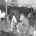 (Submitted by Lynn Miller)Richard Miller, doing the evening milking at their Aurora, Ohio, farm c. 1955. Richard, now 92, still lives in the farmhouse and sells produce during the summer at his roadside stand.