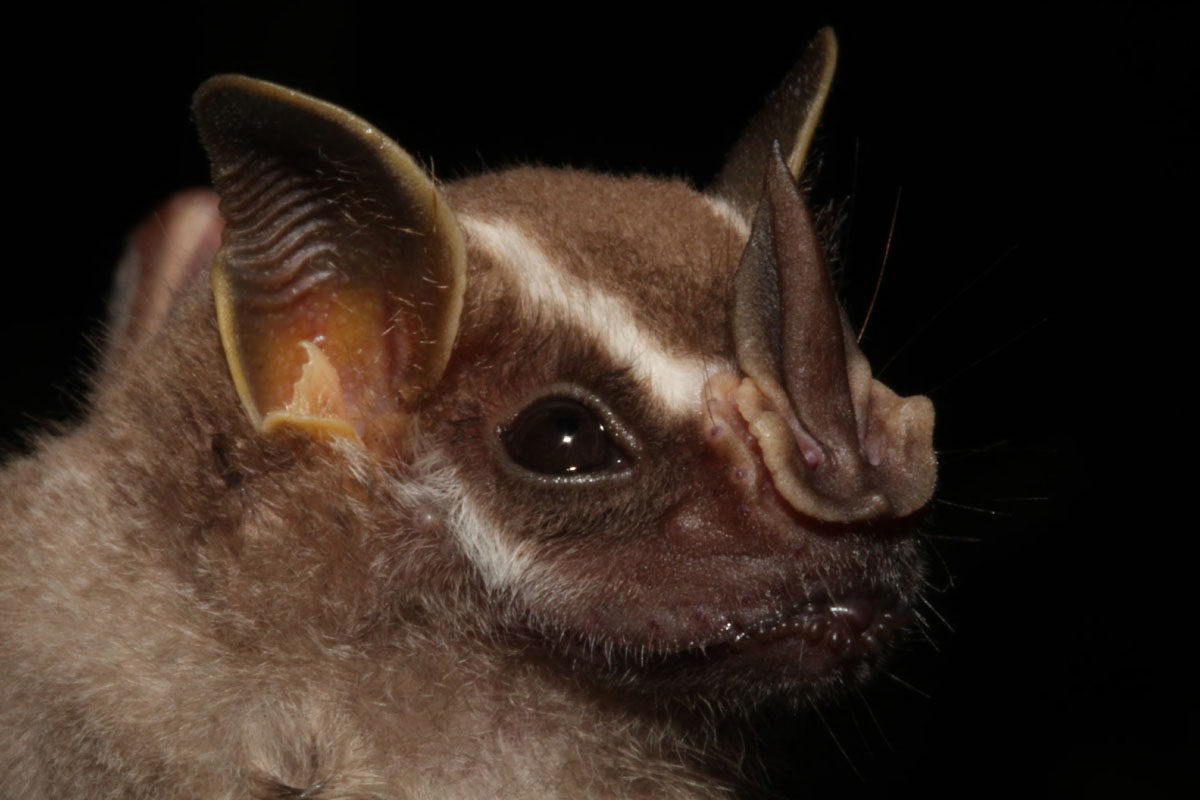 Scientists study bats to understand how we smell - Farm and Dairy
