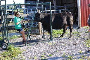 Leah Fine's participation in 4-H, including work this year with the Geauga County Junior Fair Livestock Sale Ambassadors, has taught valuable lessons in and out of the barn.