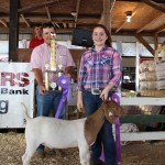Natalie Frank's 82-pound grand champion market wether received a bid of $21 a pound from Hamilton Ins. Agency, Kemp Insurance Agency, and Sugarcreek Construction Co. Pictured with Natalie Frank is Ed Rohr of Sugercreek Construction.