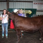 Kira Sharp won Outstanding Youth Project reserve champion honors. Her 1,274-pound steer sold to Sarchione Auto Sales, represented by Alex Sarchione, for $2.45 a pound.