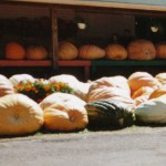 200 giant pumpkins and squash in 1994.